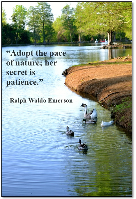 Emerson pace of nature